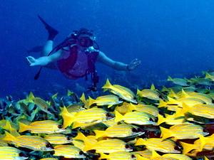 Maldives Holidays Fotos