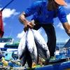 Male Fish Market Maldives