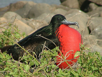 Galapagos Last Minute Cruise Deals & Offers