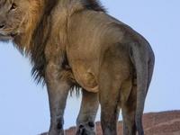 3 Days 2 Nights Masai Mara