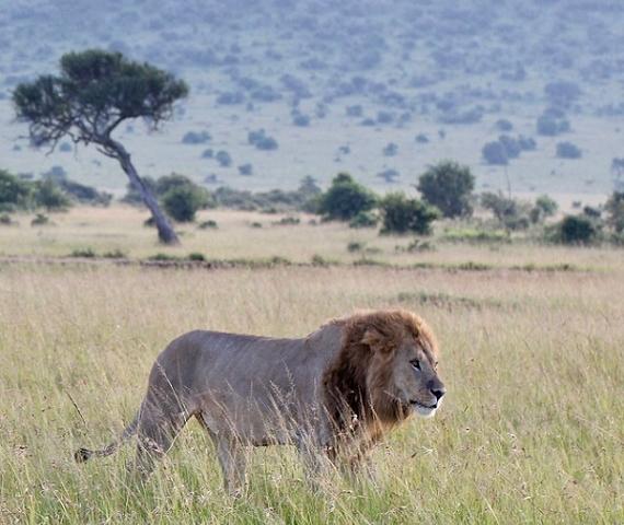 Safari Dreamer 6 Days Wildlife Safari Kenya Photos