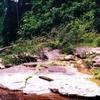 Maliau Basin Conservation Area