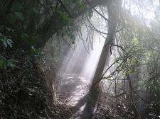 Manawatu Gorge Track - Te Urewera National Park - New Zealand