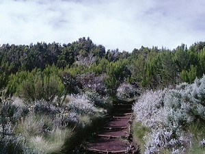 Mandara Hut To Horombo Hut - Hiking Kilimanjaro