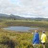 Mangarakau Swamp - South Island - New Zealand