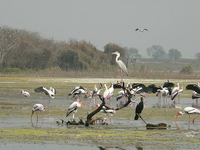 Manjira Wildlife Sanctuary