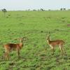 Manovo-Gounda St. Floris National Park