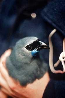 Mapara Wildlife Reserve - North Island - New Zealand