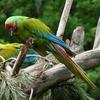 Maquenque National Park
