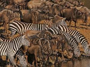 Masai Mara Unbeatable Photos