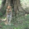 Marat Longri Wildlife Sanctuary