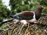 Marawaiwai Scenic Reserve