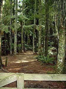 Marawaiwai Track