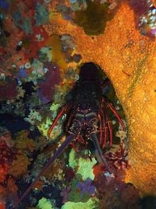 Marine Treasure @ Poor Knights Diving Site NZ