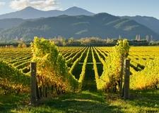 Marlborough Vineyards - New Zealand South Island