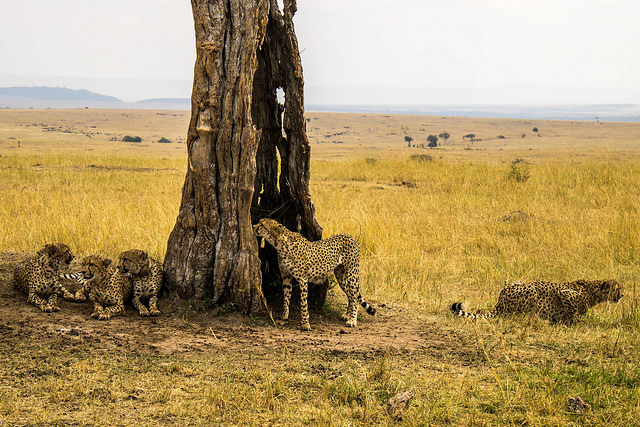 5 Days Maasai mara, Amboseli, Nakuru and Naivasha safari Photos