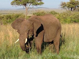 8 Days Amboseli – Lake Nakuru - Masai Mara Kenya Safari
