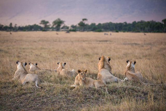 6 Day Amboseli, Lake Naivasha And Masai Mara Road Safari Photos