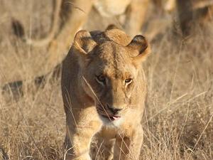 4 Days Budget Masai Mara Tour Photos