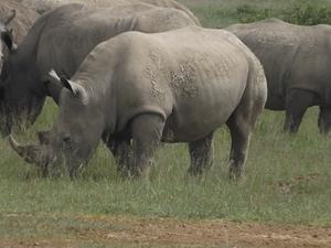 4 Days 3 Nights Masai Mara Tour Fotos