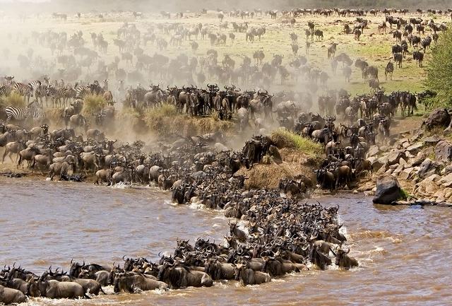 Kenya Highlights Safari Photos