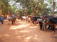 Matheran Pony Ride - Maharashtra - India