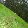 Mattupetty Hillside
