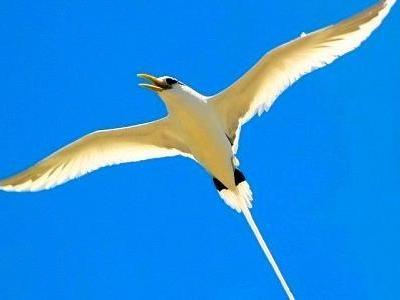 Mauritius Bird