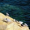 ME Acadia National Park Otter Cliff