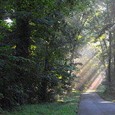 Meeman-Shelby Forest State Park