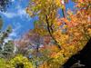 Mescal Ridge Trail 186 - Tonto National Forest - Arizona - USA