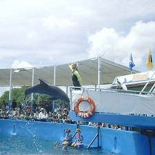 The Dolphin Show At The Miami Seaquarium