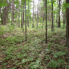 Miami Whitewater Forest County Park