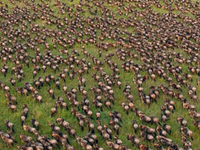 Migration Trails - Maasai Mara