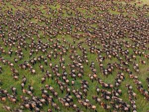 Migration Trails - Maasai Mara Fotos