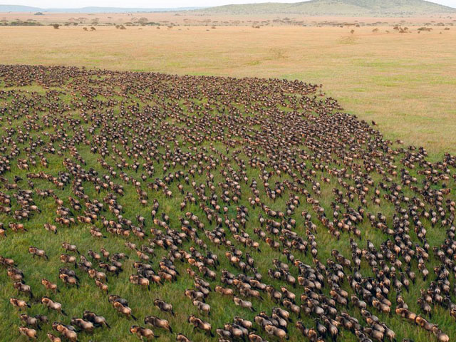 Migration Trails - Maasai Mara Photos