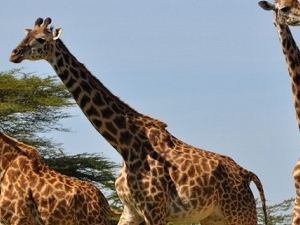 8 Days 7 Nights - Encounter the Beauty of the Southern Tanzania