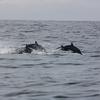 Mirissa Dolphins