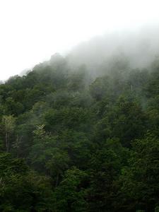 Misty Kaimanawa Landscape