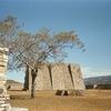 Mixco Viejo Tree & Pyramid- Chimaltenango Department - Guatemala