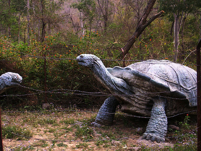 Model Of Extinct Giant Turtle Of Siwalik Hills