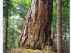 Modrzyna Nature Reserve