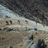 Mongolia Hiking - Khustai National Park