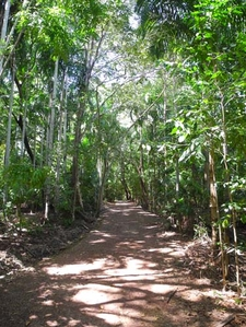 Monsoon Forest Trail