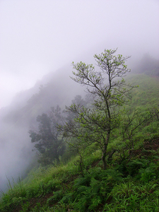 Mookambika Landscape