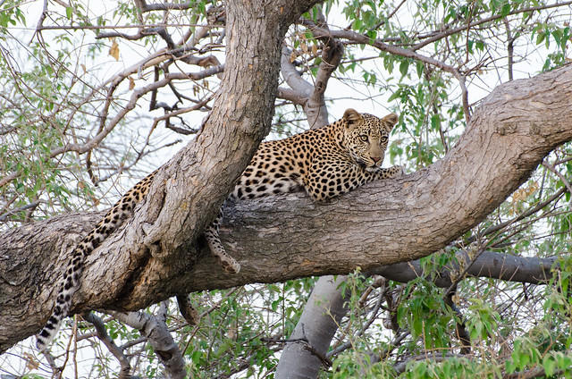 11 Days Botswana Northern Experience - Accommodated Photos