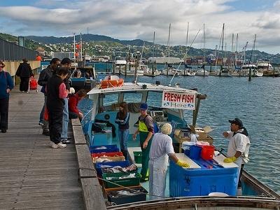 Morning Fresh Fish @ Wellington NZ