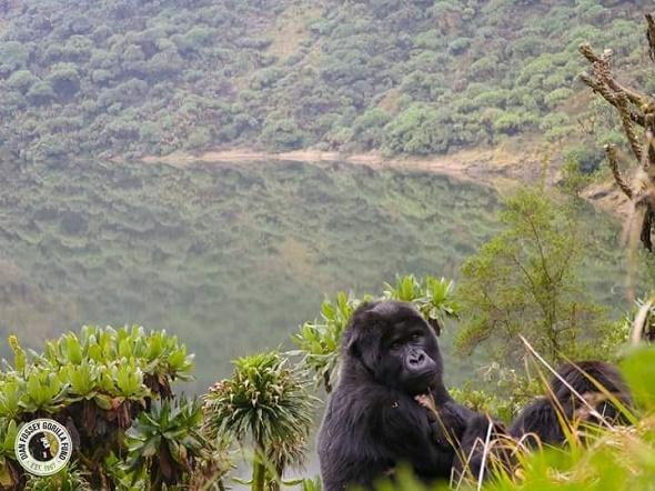 Visit Virunga National Park in 2019-DR Congo Photos