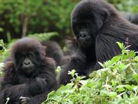 DR Congo & Rwanda Tour