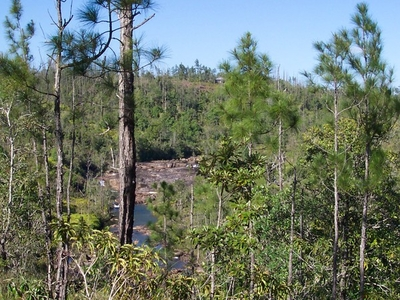 Mountain Pine Ridge